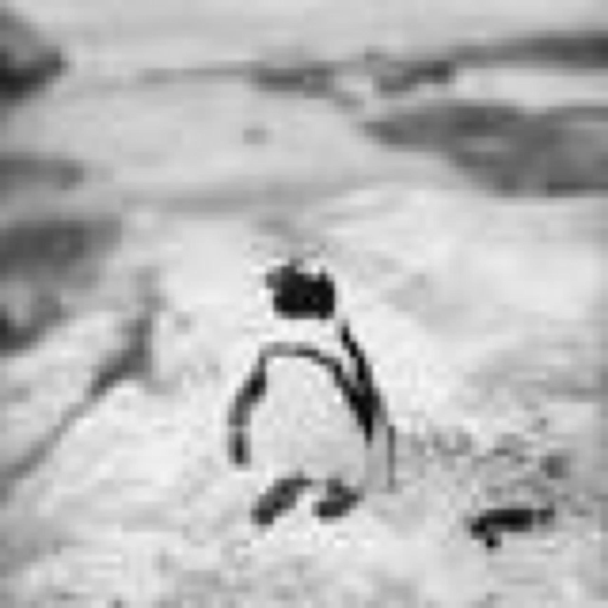 Penguins of Simonstown