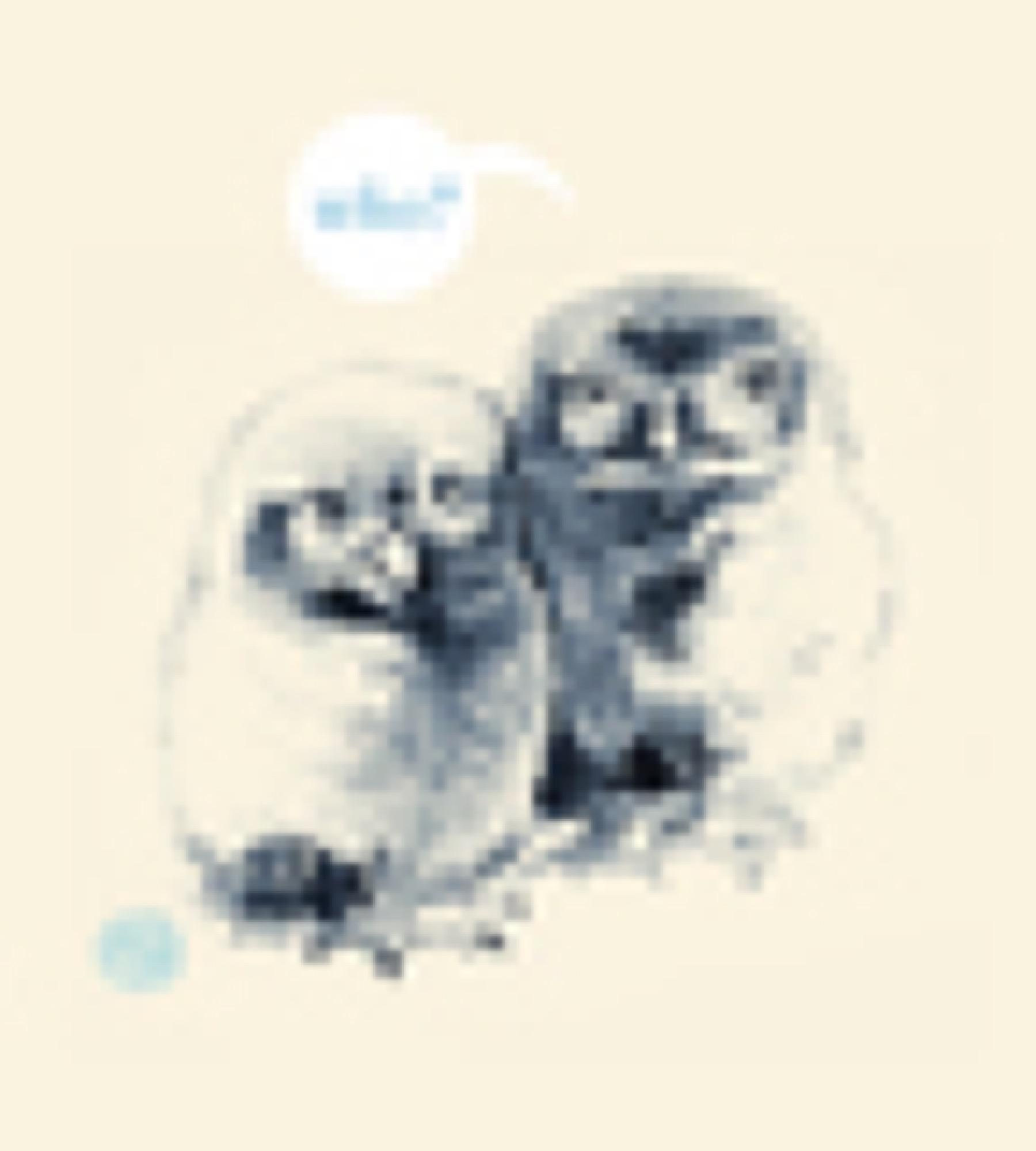 sagamariah owlets
