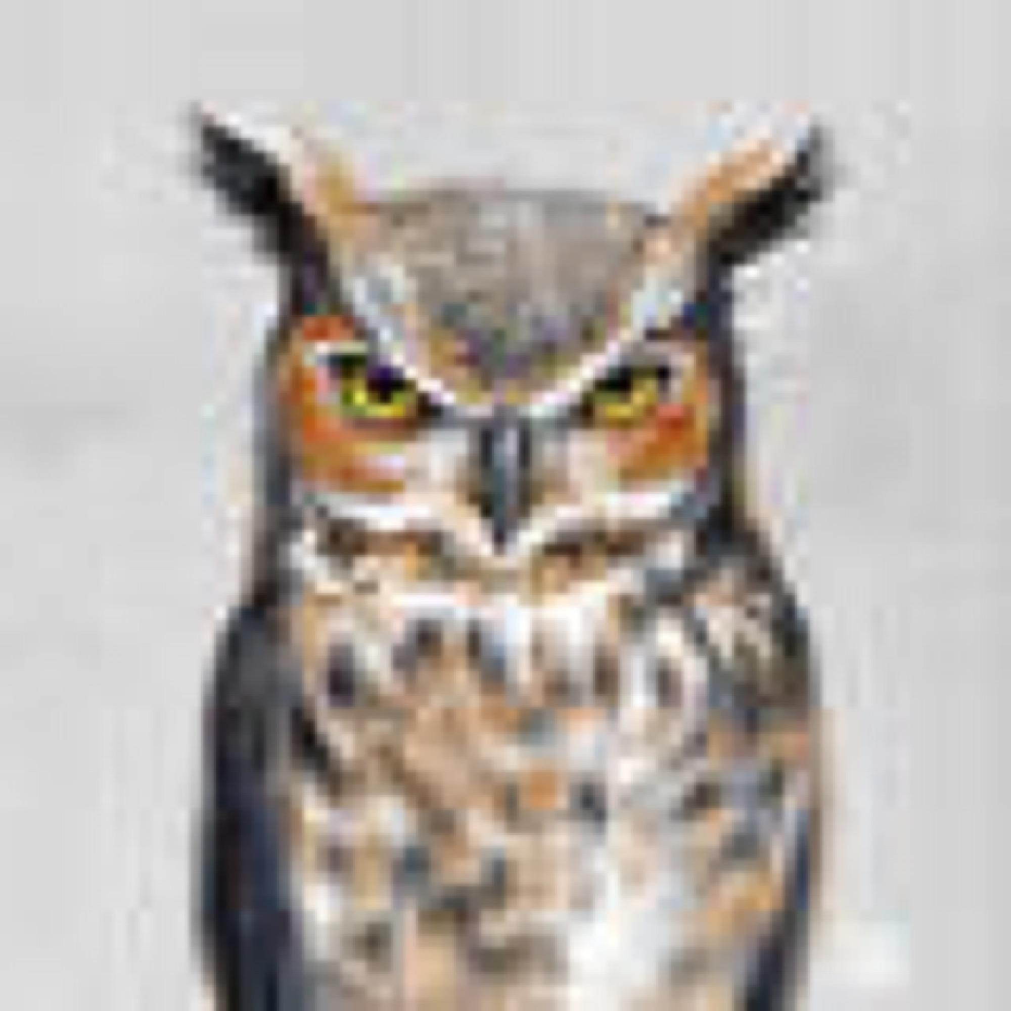 sagamariah_owl_portrait
