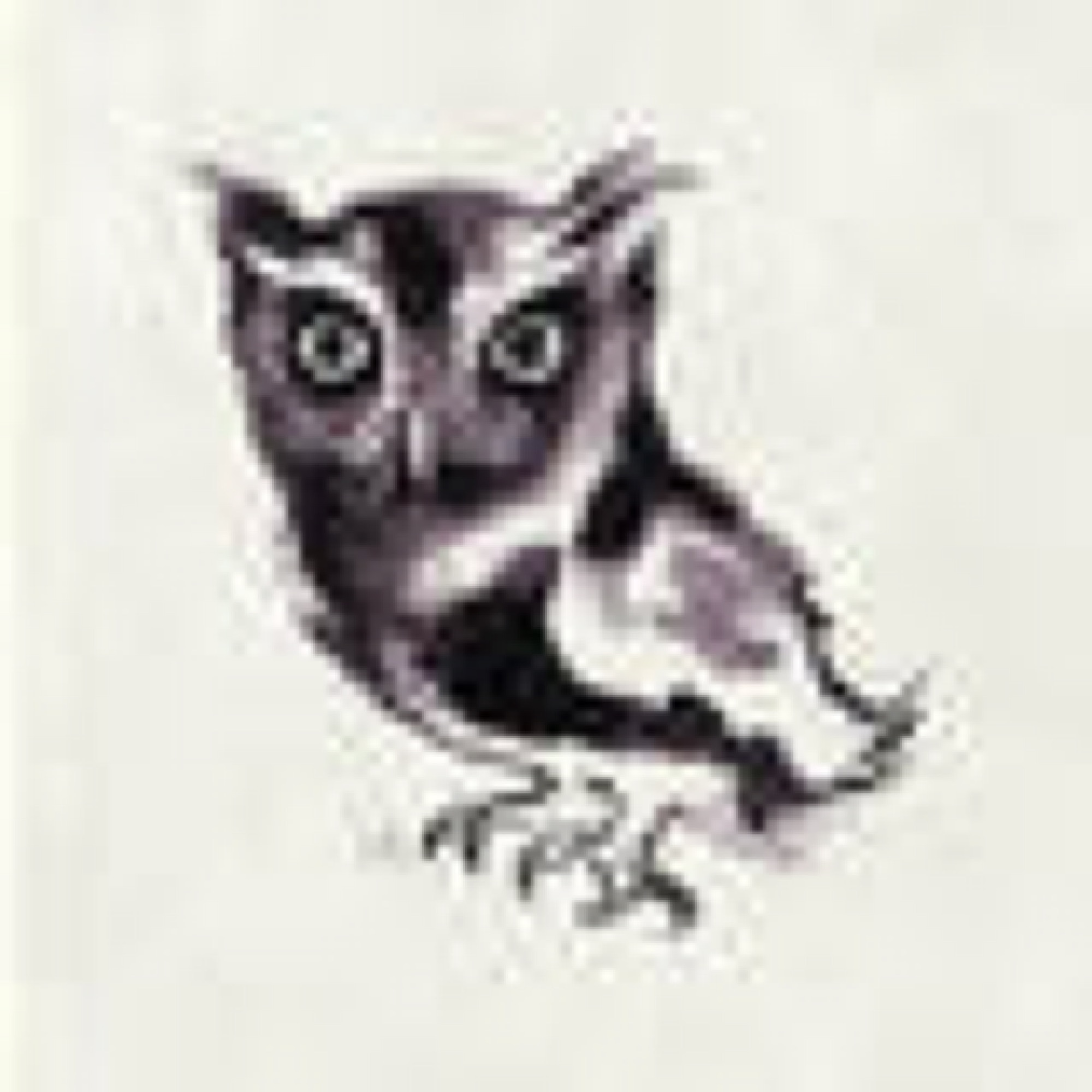sagamariah_owl_1