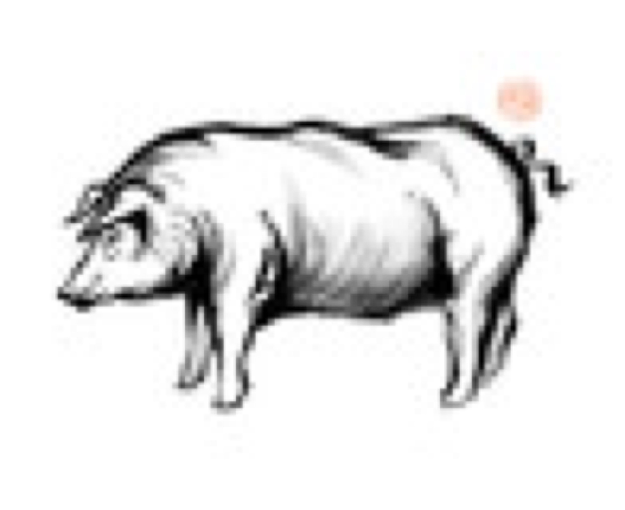 ICA Iberian pig 1 -sagamariah